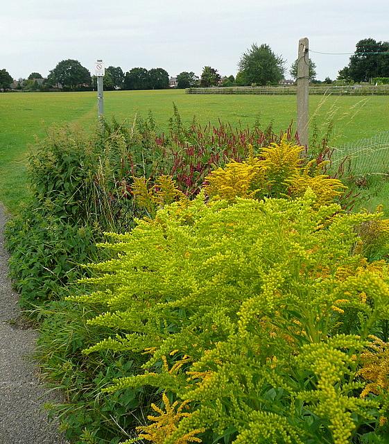 Park at Cookham Rise