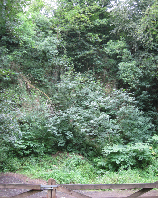 Disused quarry, Tuckenhay