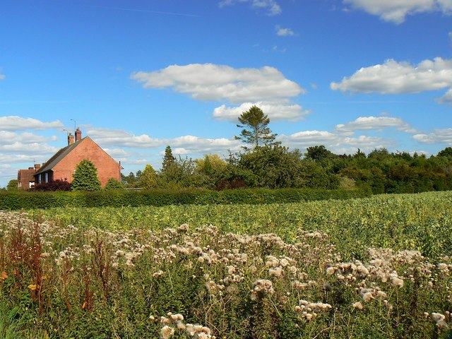 Thistles and a beanfield near Wickfield Farm Cottages, Shefford Woodlands