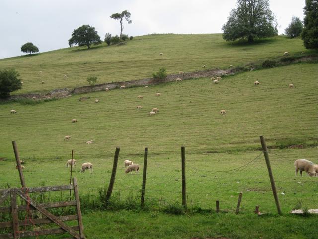 Terraced hillside pasture