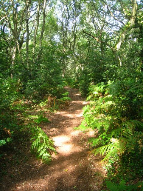 Path on Upper Common