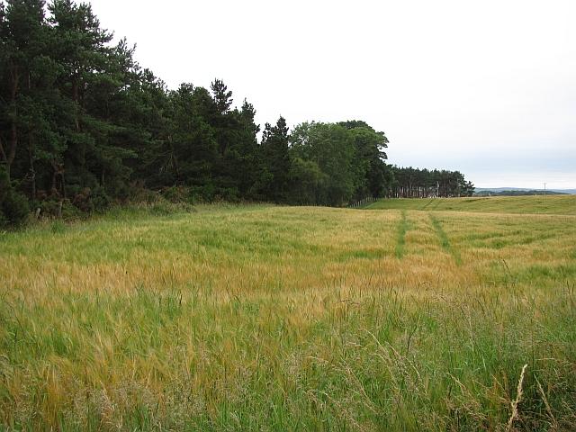 Edge of Maverston Wood