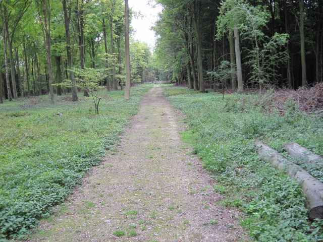 Footpath towards The Folly on Nore Hill