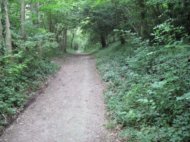 Butt Lane near Slindon