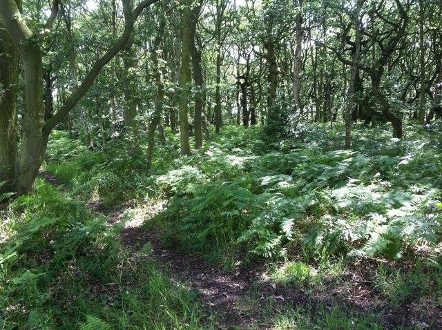Dogloitch Woods
