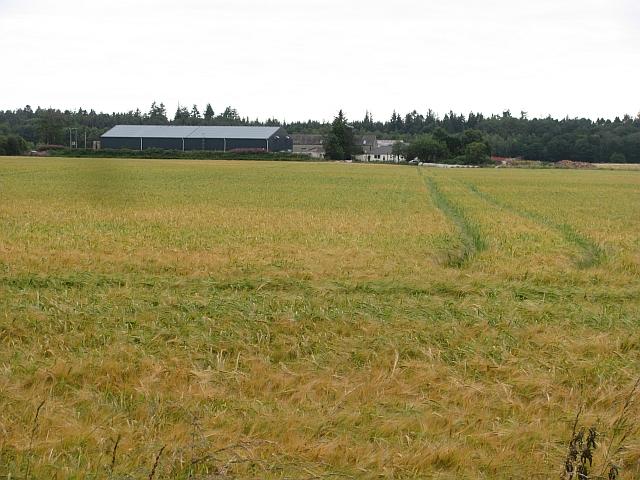Barley, Wester Calcots
