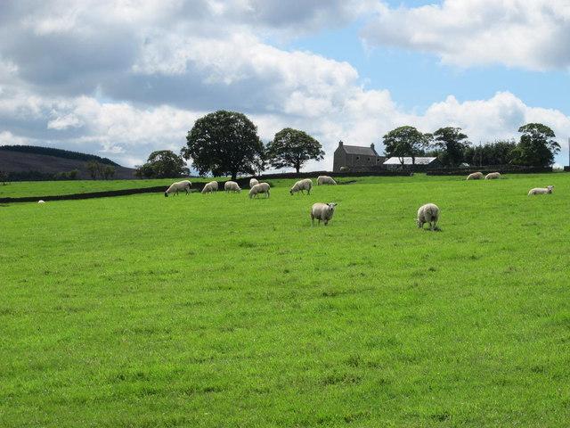 Pastures east of Hesleywell
