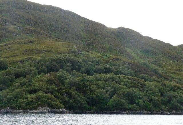 Hillside above Tarbet Bay