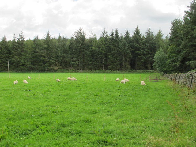 Pastures and Flat Plantation