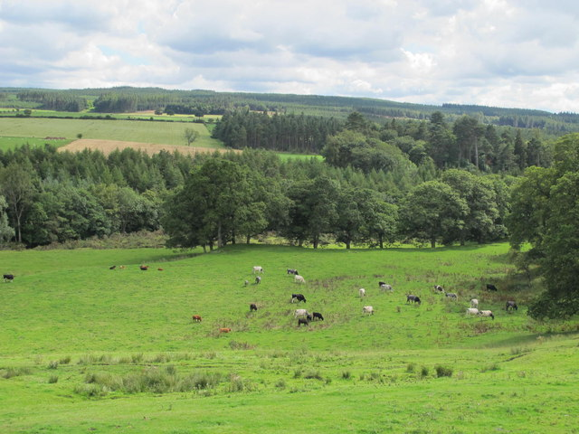 Pastures and woodland below Low Staples