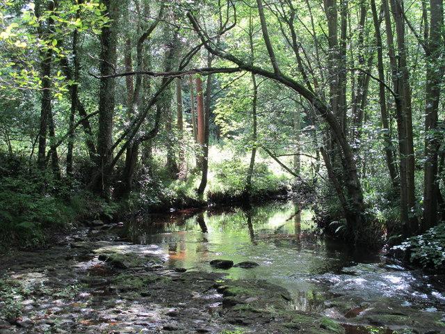 Devil's Water above the bridge at Dukesfield Mill (2)