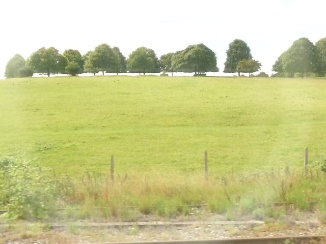 Hungerford : Grassy Field & Trees