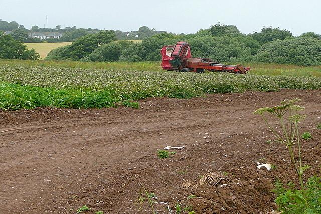 Arable land off Gitchell Lane