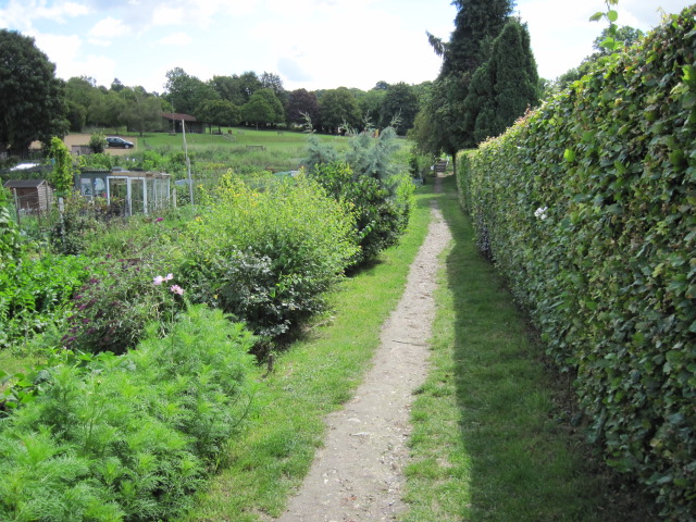 Footpath beside allotment gardens, Twyford