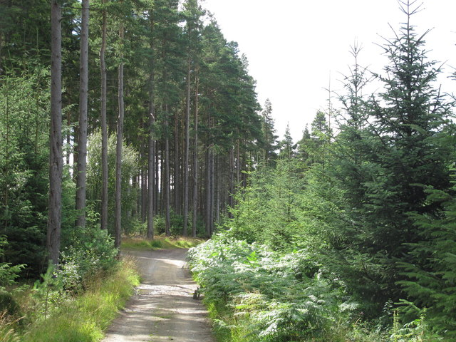 Plantation on Leadpipe Hill