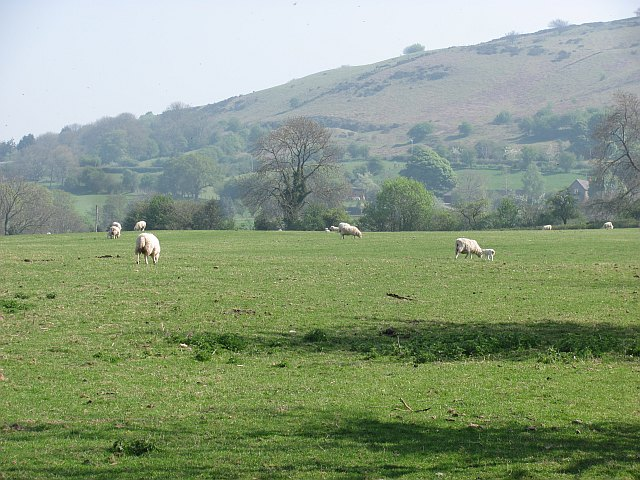 Lambs under the Brown Clee