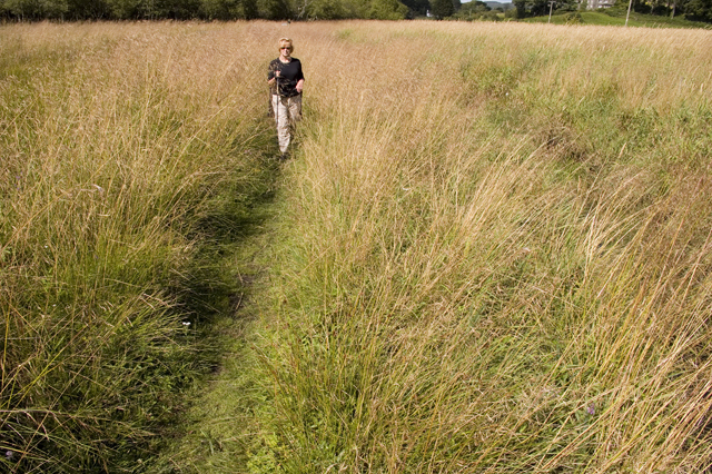 Footpath across Rusland Moss National Nature reserve
