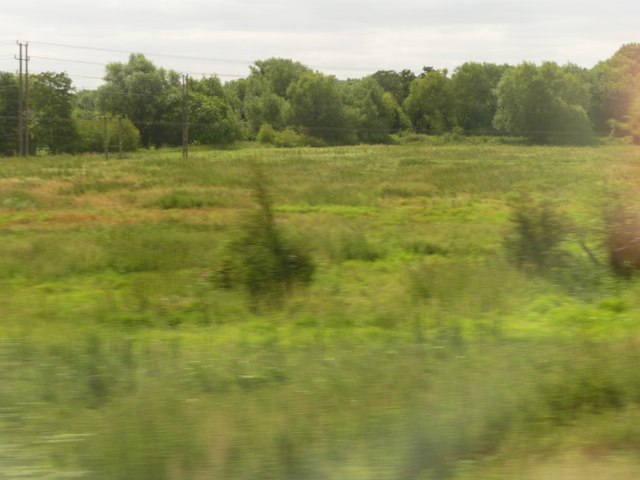 West Berkshire : Grassy Field & Trees