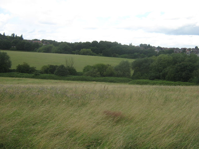 Fields of Woodland Farm