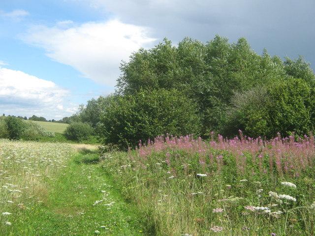 Woodlands Farm field path
