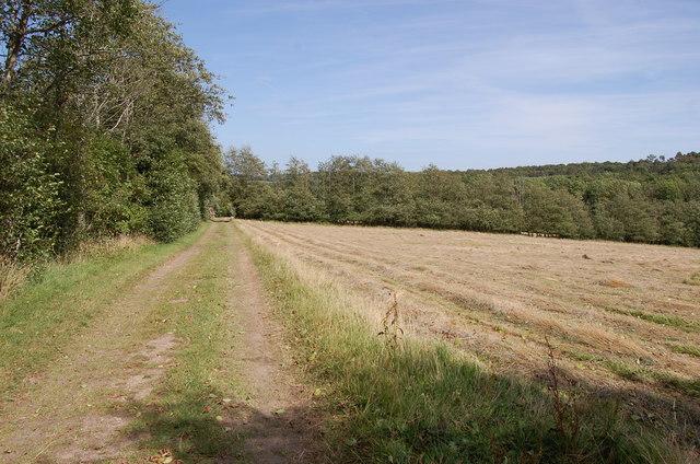 Footpath along hayfield, near Hurst Green