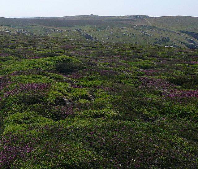 Heather on Higher Bosistow Cliffs