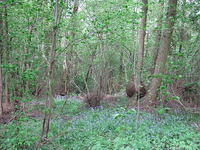 Suttonhill Coppice