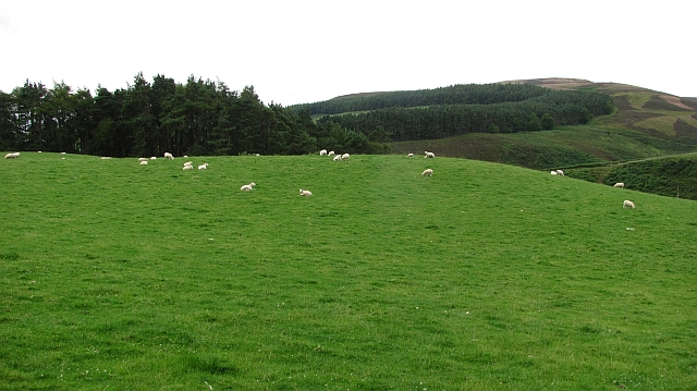 Sheep, Glensaugh