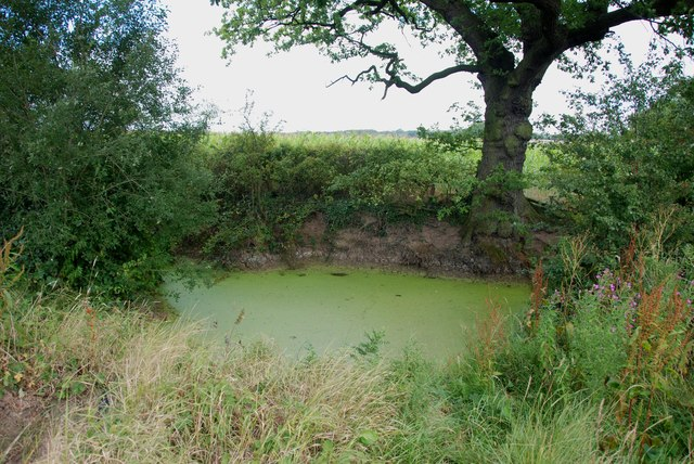 Weed Covered Pond, Glass Lane