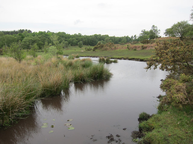 Pond on Cadnam Common