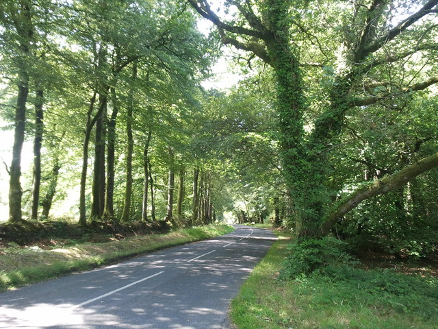 Trees and sunlight on Mamhead Road