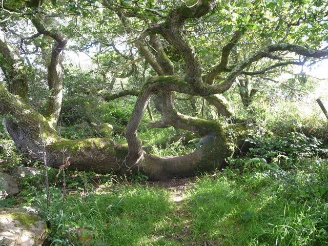 Footpath through the trees above Benton Wood