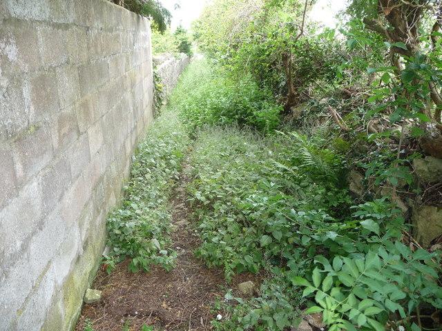 Overgrown footpath in St Brides Major