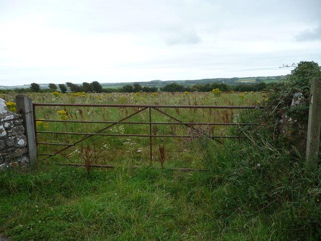 Rough pasture near Wallas Farm
