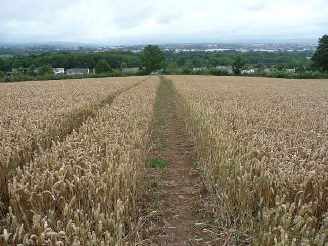 Corn fields above Corntown