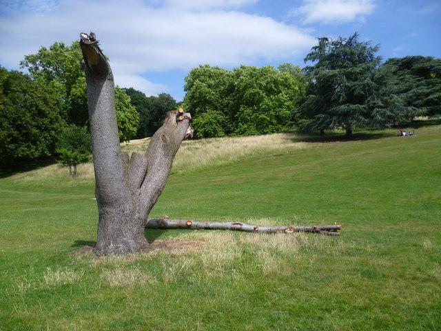 Old tree stump in Richmond Park