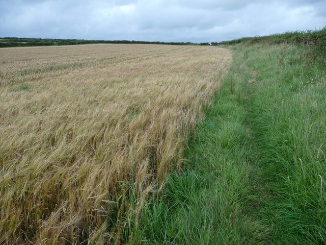 Field edge footpath near St Brides Major