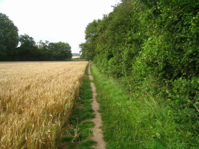Path beside Well's Copse