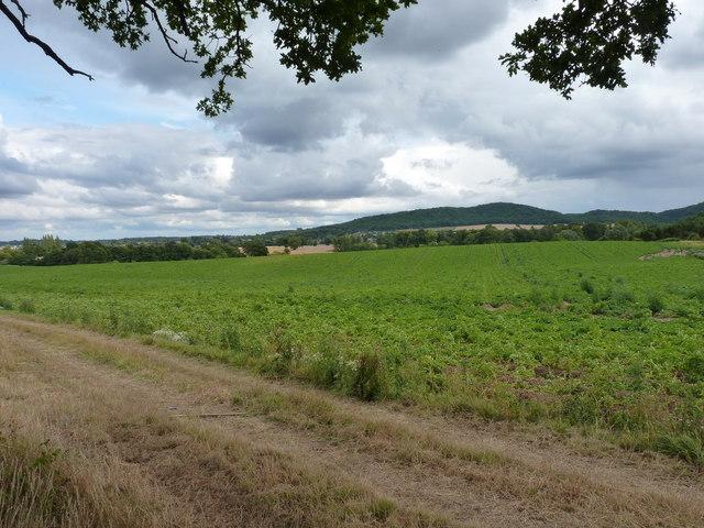 Farmland west of Wellington