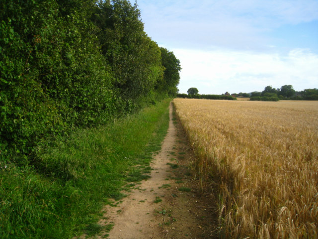 Path by Well's Copse