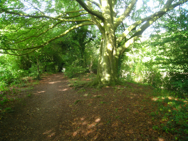 Path near Well's Copse