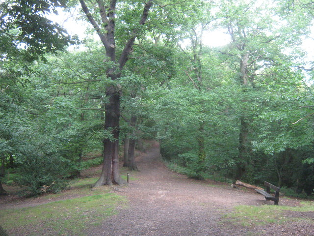 Path in Lesnes Abbey Woods