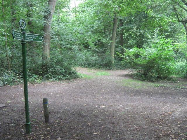 Green Chain Walk in Lesnes Abbey Woods