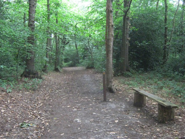 Woodland Path in Lesnes Abbey Woods