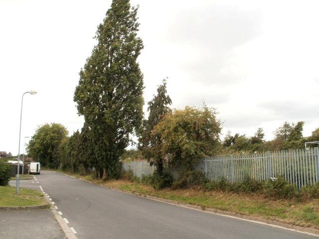 One very tall tree, Moorland Park, Newport