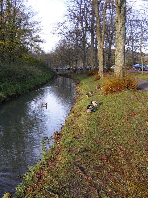 Arundel Ducks