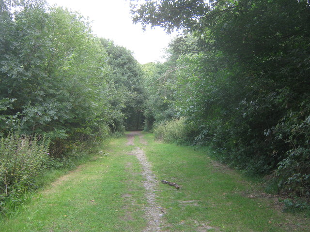 Woodland path in Frank's Park