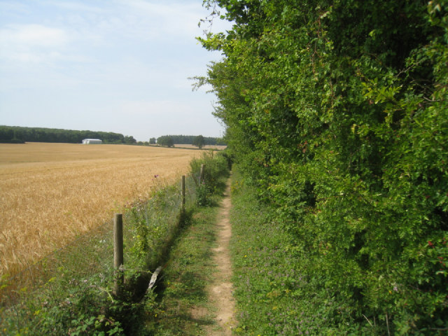Footpath & wheat field