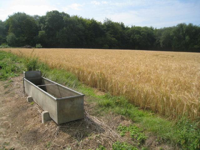 Trough & wheat