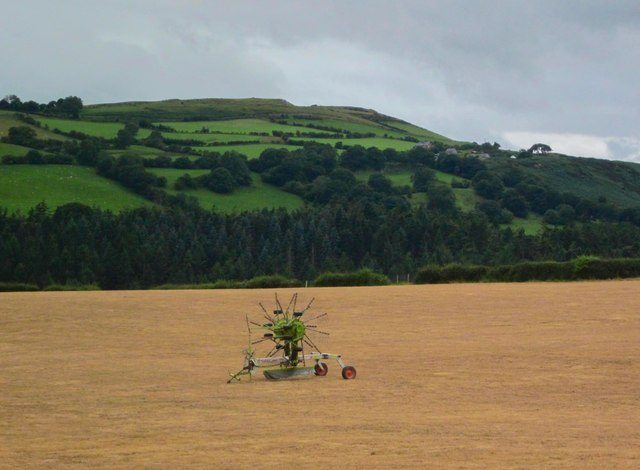 Cae o wenith / Wheat field